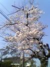 yae_hanjo_3